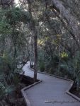 Honeyhair at Florida - #19