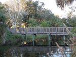 Honeyhair at Florida - #20