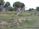 Honeyhair at Florida - #50