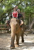 Honeyhair in Vietnam - #128